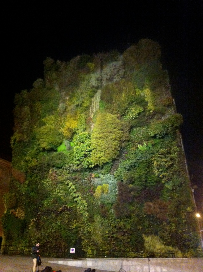 A living wall!! So amazing!!